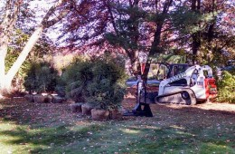 Hemlock Tree Installation – North Andover, MA